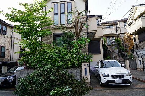 20170514 庭木 11.jpg