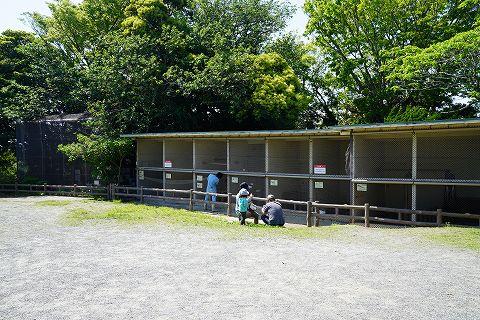20180428 鎌倉散策 35.jpg