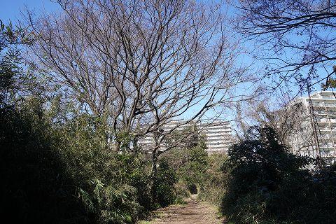 20190202 金沢文庫散策 12.jpg