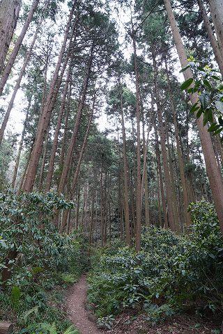 20190330 鎌倉散策 07.jpg